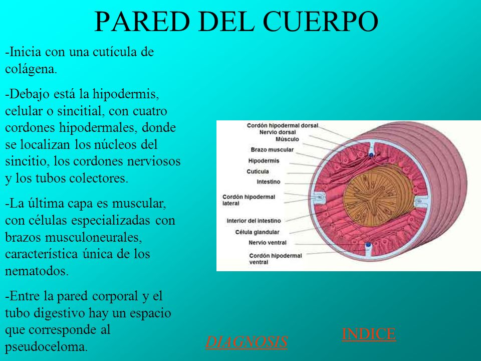 PARED DEL CUERPO INDICE DIAGNOSIS