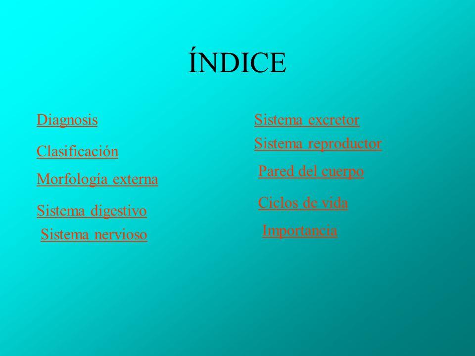 ÍNDICE Diagnosis Sistema excretor Sistema reproductor Clasificación