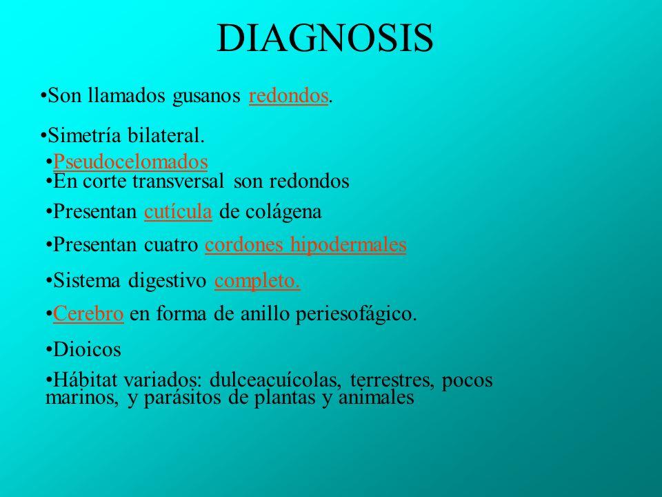 DIAGNOSIS Son llamados gusanos redondos. Simetría bilateral.