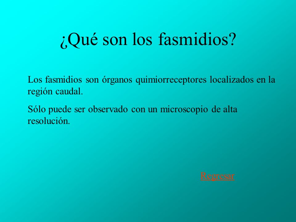 ¿Qué son los fasmidios Los fasmidios son órganos quimiorreceptores localizados en la región caudal.