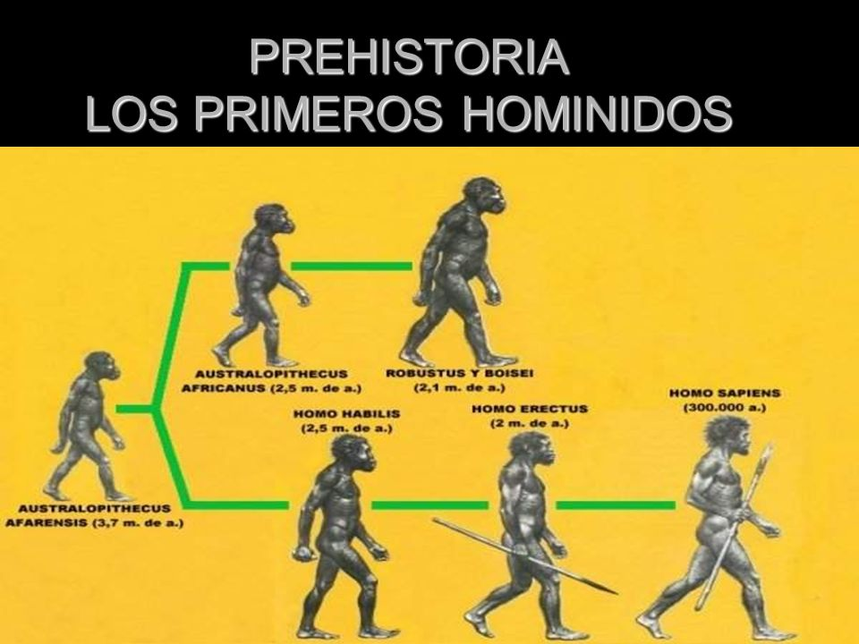 PREHISTORIA LOS PRIMEROS HOMINIDOS