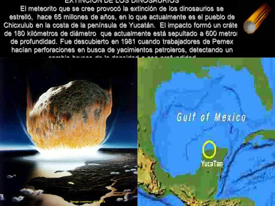 EXTINCION DE LOS DINOSAURIOS El meteorito que se cree provocó la extinción de los dinosaurios se estrelló, hace 65 millones de años, en lo que actualmente es el pueblo de Chicxulub en la costa de la península de Yucatán. El impacto formó un cráter de 180 kilómetros de diámetro que actualmente está sepultado a 600 metros de profundidad.