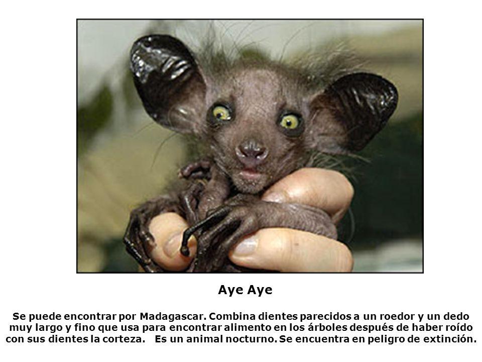 Se puede encontrar por Madagascar