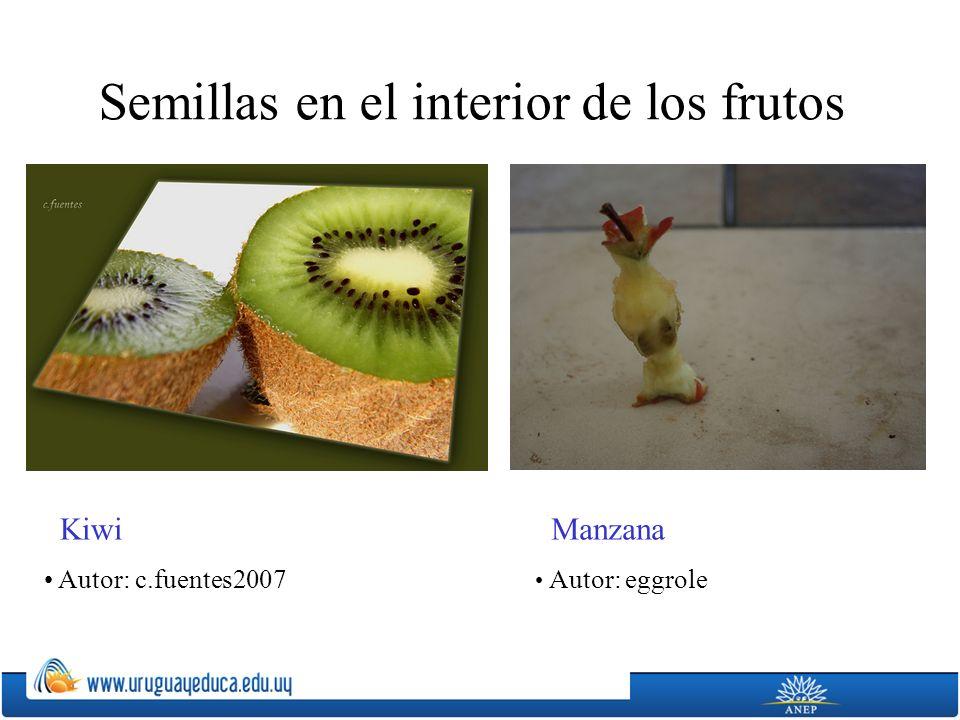 Semillas en el interior de los frutos