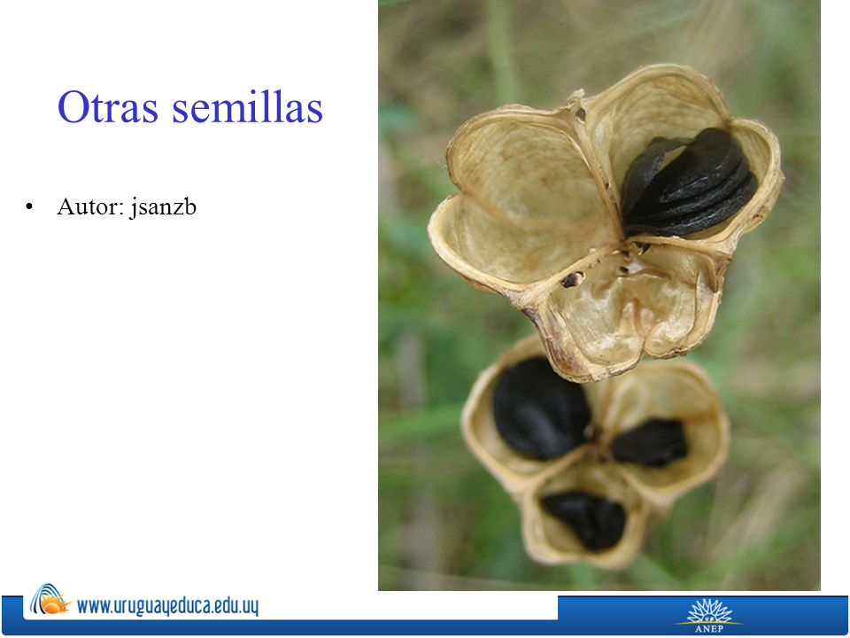 Otras semillas Autor: jsanzb