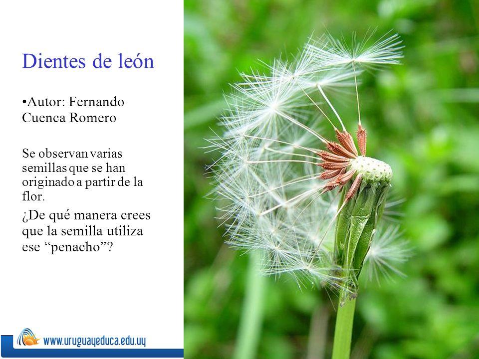 Dientes de león Autor: Fernando Cuenca Romero