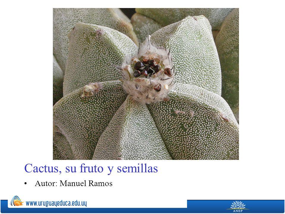 Cactus, su fruto y semillas