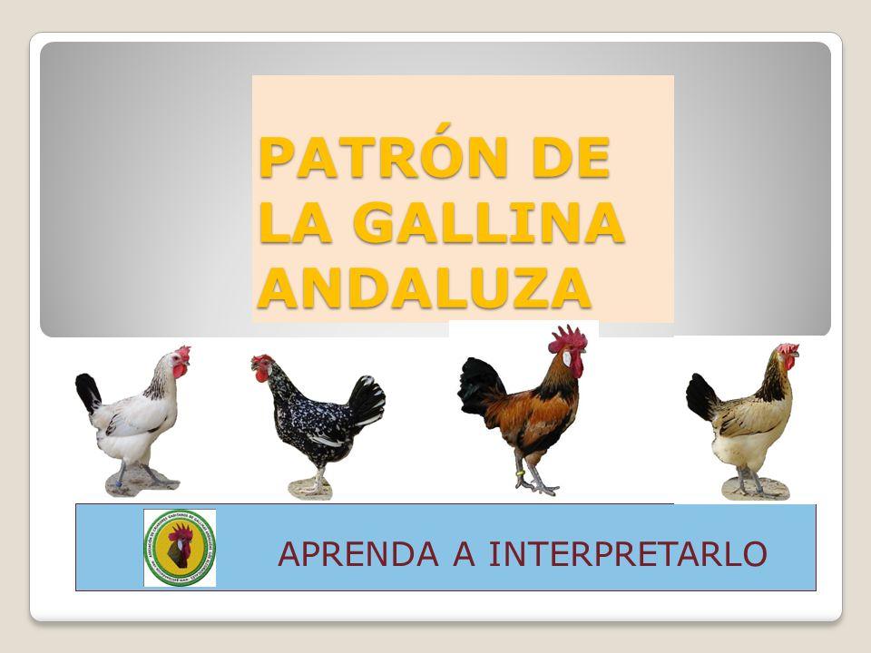 PATRÓN DE LA GALLINA ANDALUZA