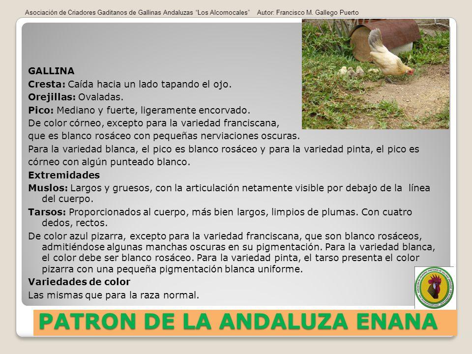 PATRON DE LA ANDALUZA ENANA