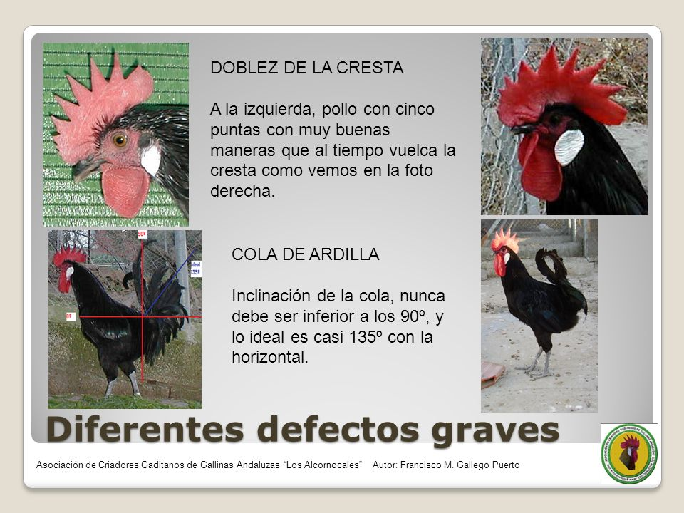 Diferentes defectos graves