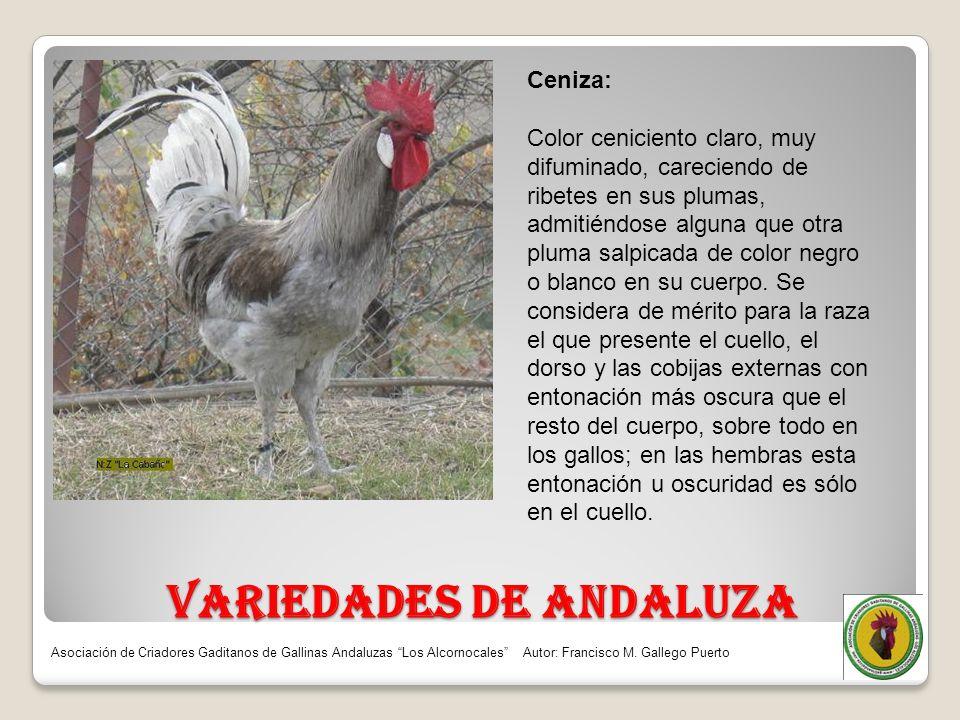 VARIEDADES DE ANDALUZA