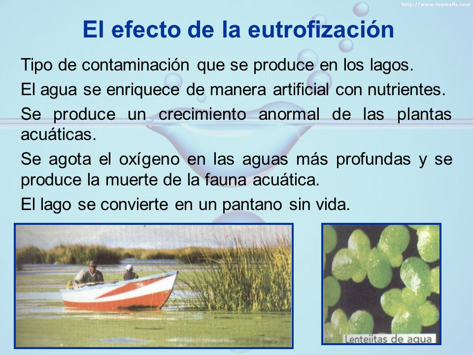El efecto de la eutrofización