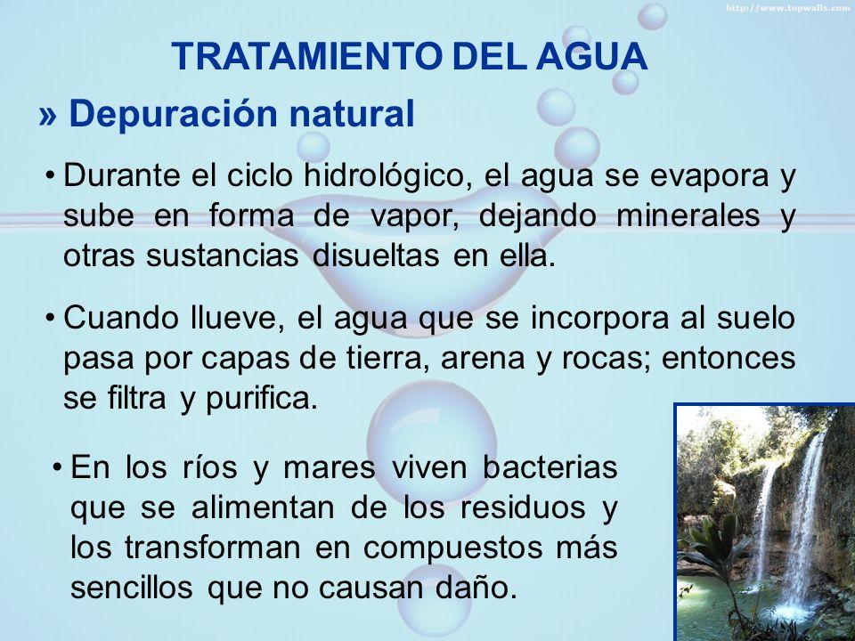 TRATAMIENTO DEL AGUA » Depuración natural