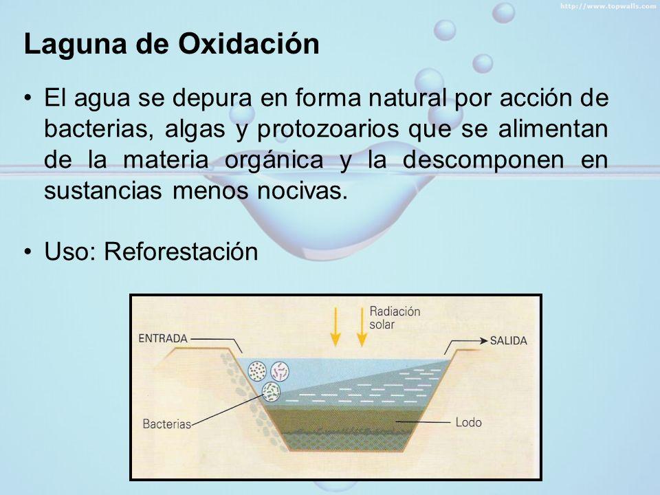 Laguna de Oxidación