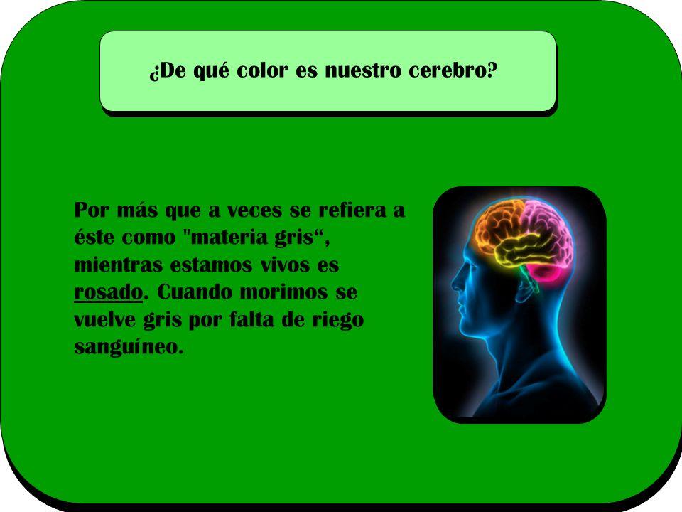 ¿De qué color es nuestro cerebro