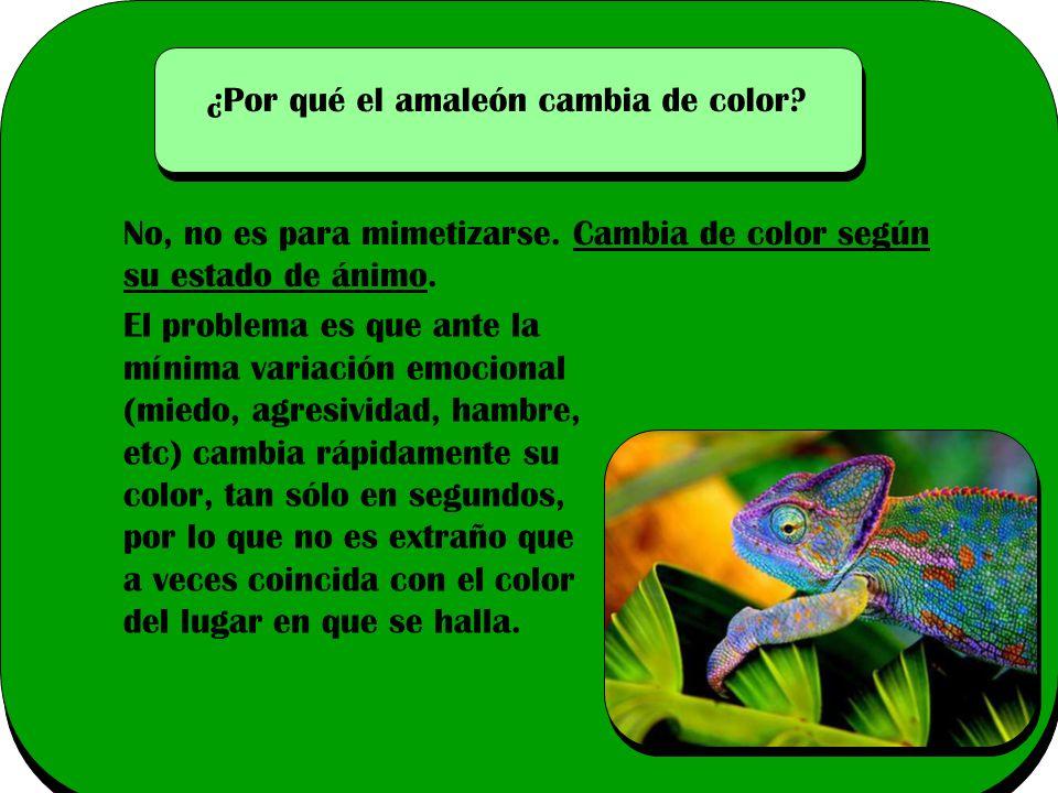 ¿Por qué el amaleón cambia de color