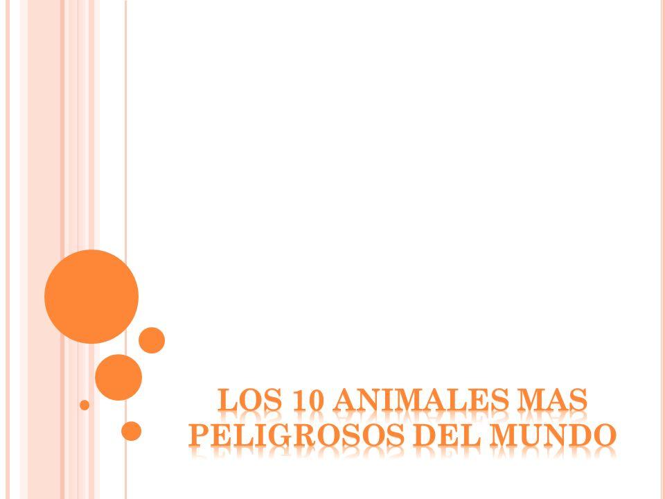 LOS 10 ANIMALES MAS PELIGROSOS DEL MUNDO
