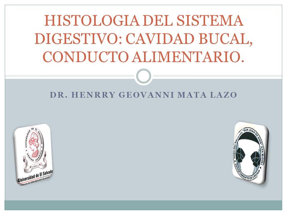 HISTOLOGIA DEL SISTEMA DIGESTIVO: CAVIDAD BUCAL, CONDUCTO ALIMENTARIO.