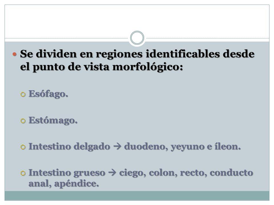Se dividen en regiones identificables desde el punto de vista morfológico: