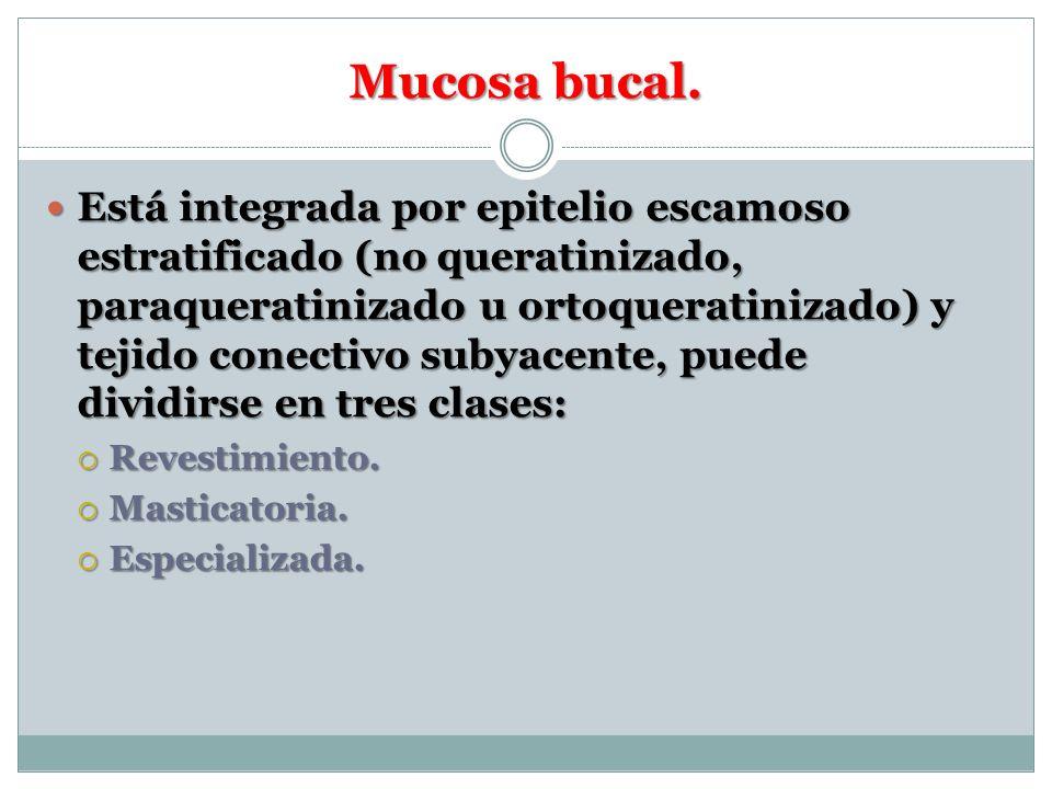 Mucosa bucal.