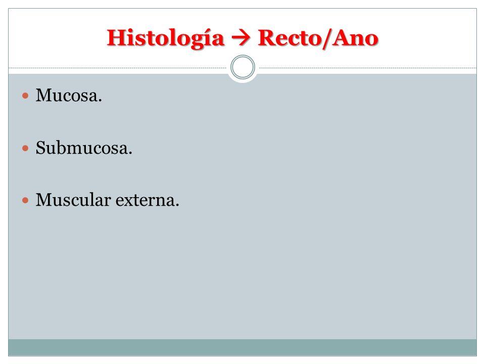 Histología  Recto/Ano