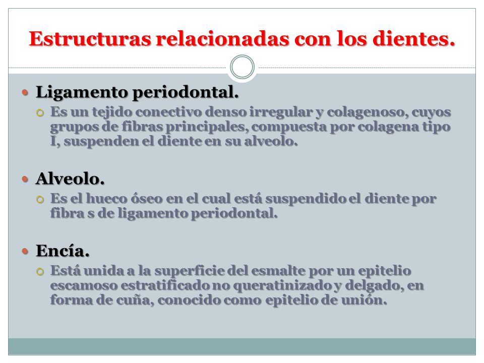 Estructuras relacionadas con los dientes.