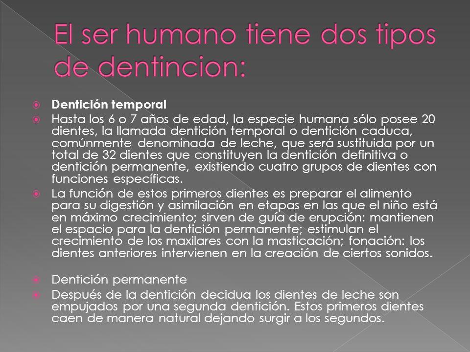 El ser humano tiene dos tipos de dentincion: