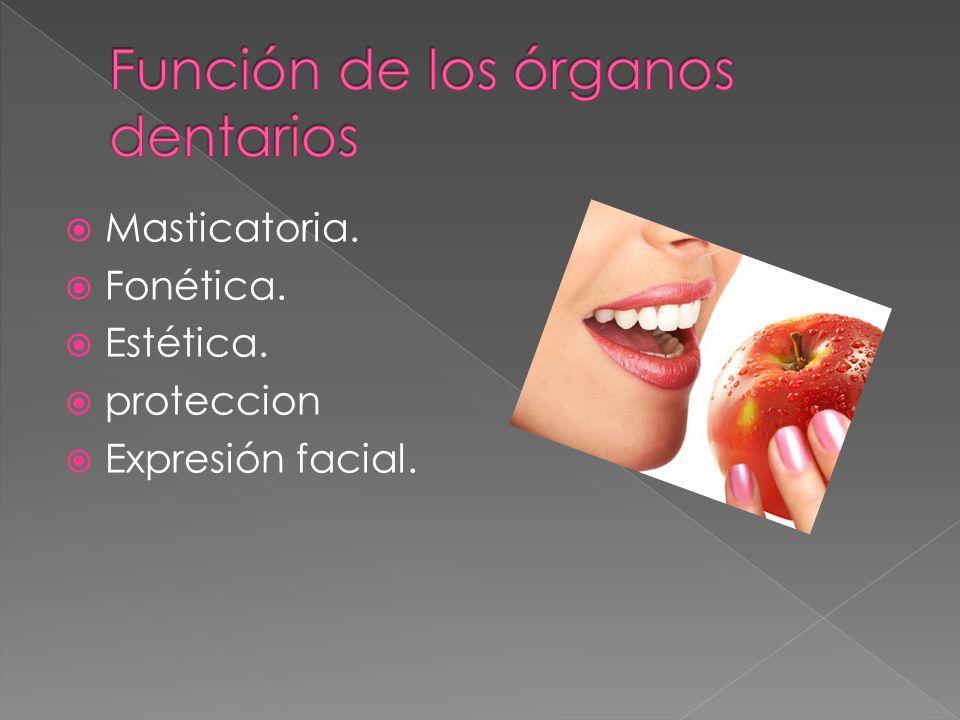 Función de los órganos dentarios