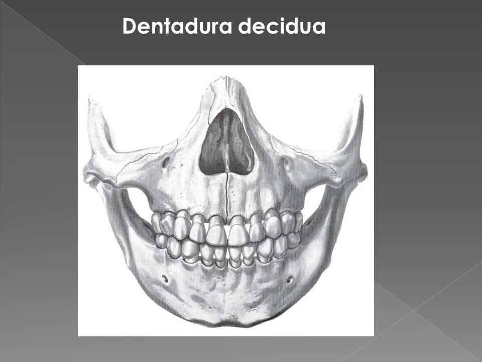 Dentadura decidua