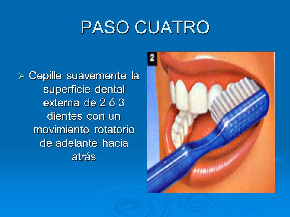 PASO CUATRO Cepille suavemente la superficie dental externa de 2 ó 3 dientes con un movimiento rotatorio de adelante hacia atrás.