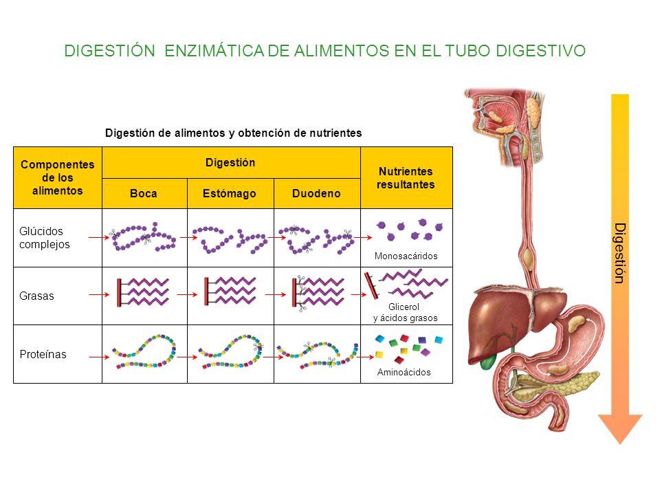 Nutrientes resultantes Componentes de los alimentos