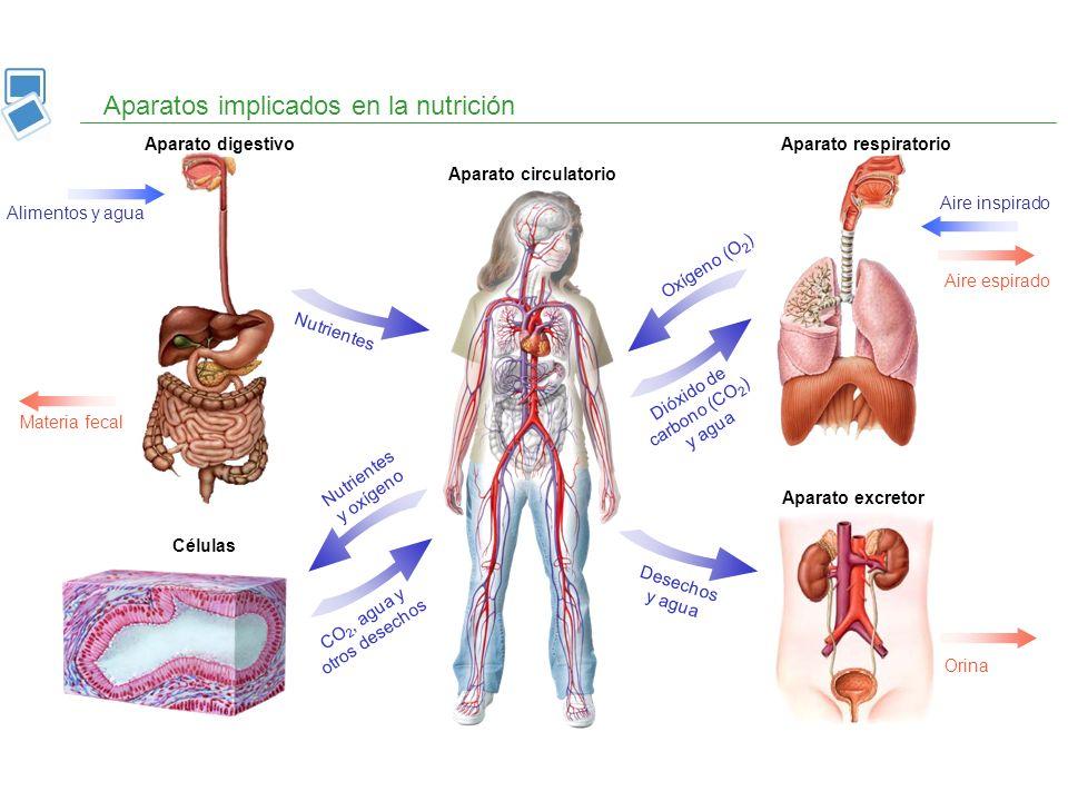 Aparatos implicados en la nutrición