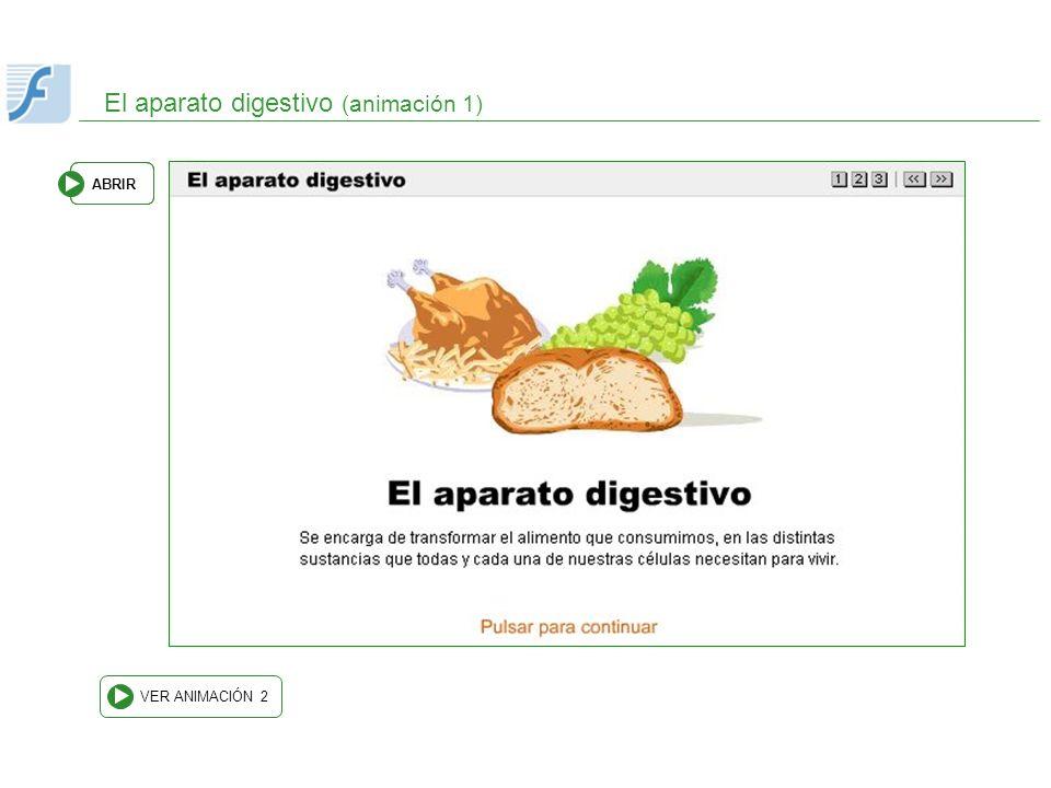 El aparato digestivo (animación 1)