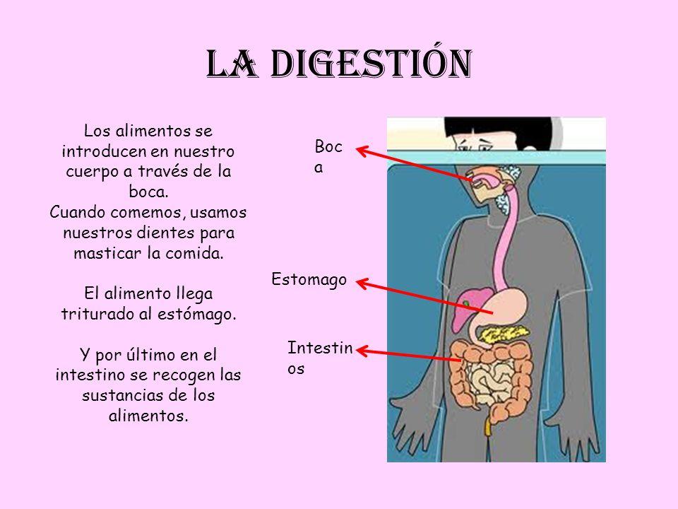 LA DIGESTIÓN Los alimentos se introducen en nuestro cuerpo a través de la boca. Cuando comemos, usamos nuestros dientes para masticar la comida.