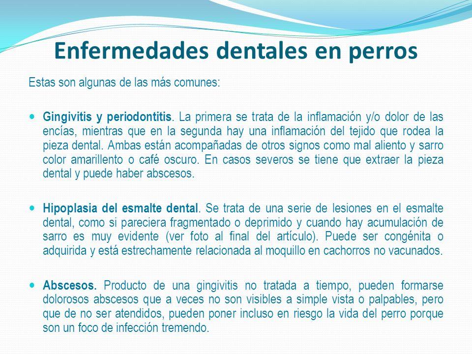 Enfermedades dentales en perros