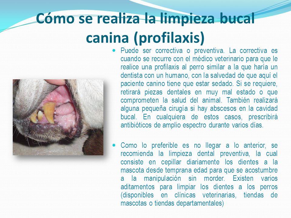 Cómo se realiza la limpieza bucal canina (profilaxis)