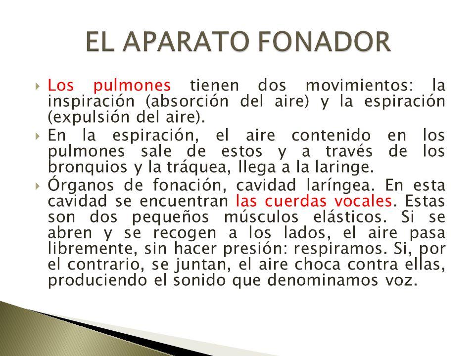 EL APARATO FONADOR Los pulmones tienen dos movimientos: la inspiración (absorción del aire) y la espiración (expulsión del aire).