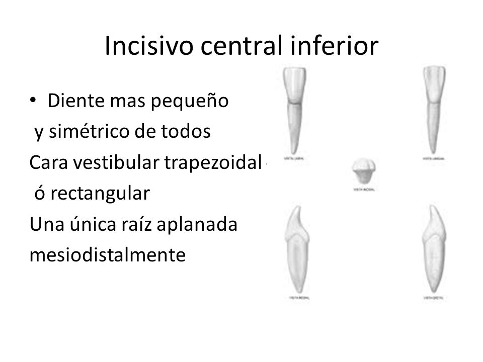 Incisivo central inferior