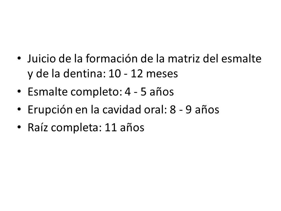 Juicio de la formación de la matriz del esmalte y de la dentina: 10 - 12 meses