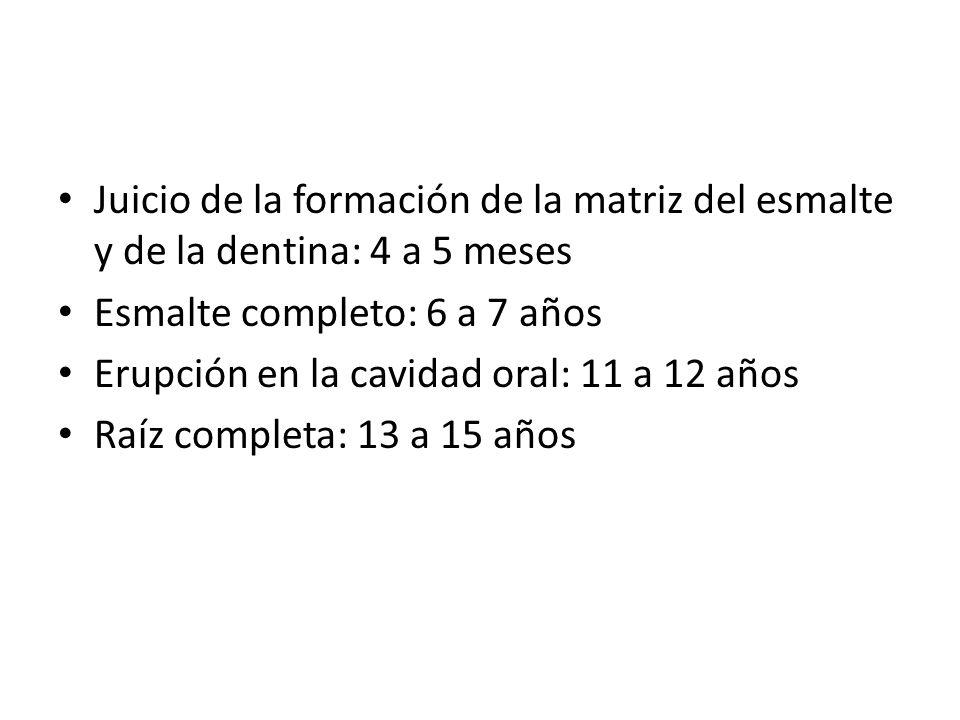 Juicio de la formación de la matriz del esmalte y de la dentina: 4 a 5 meses
