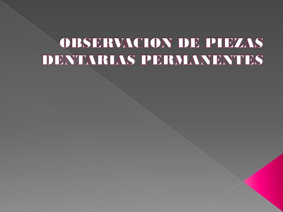 OBSERVACION DE PIEZAS DENTARIAS PERMANENTES