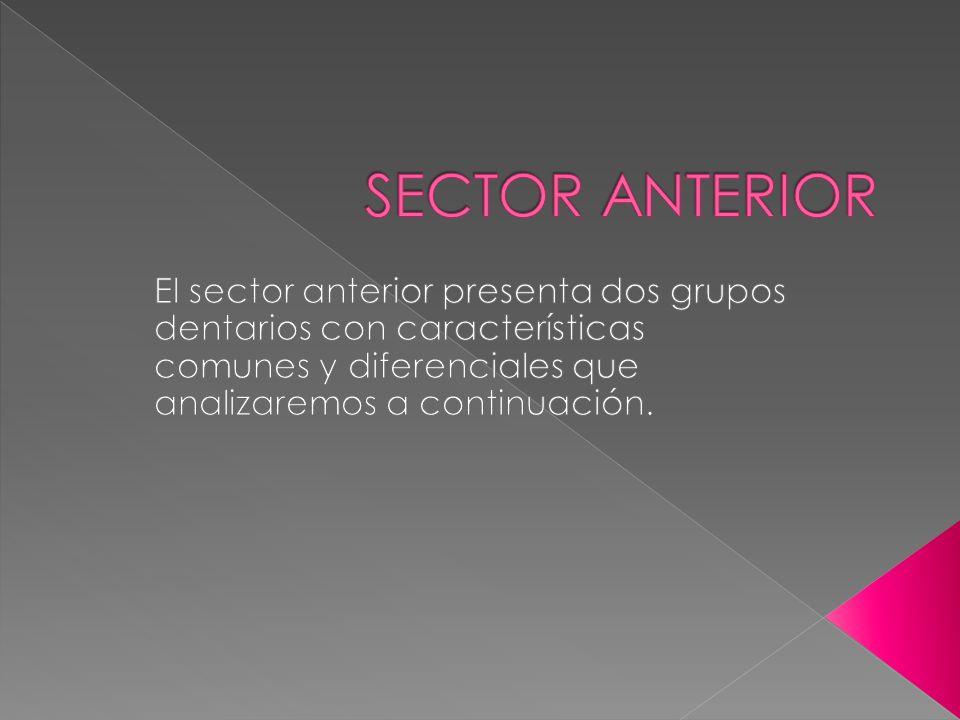 SECTOR ANTERIOR El sector anterior presenta dos grupos dentarios con características comunes y diferenciales que analizaremos a continuación.