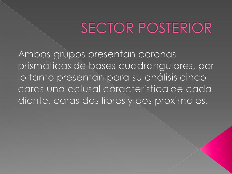 SECTOR POSTERIOR