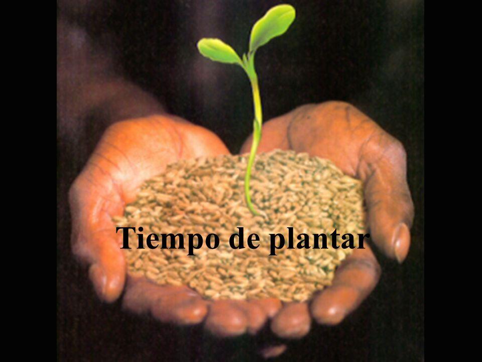 Tiempo de plantar Tiempo de plantar