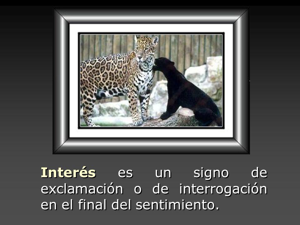 Interés es un signo de exclamación o de interrogación en el final del sentimiento.