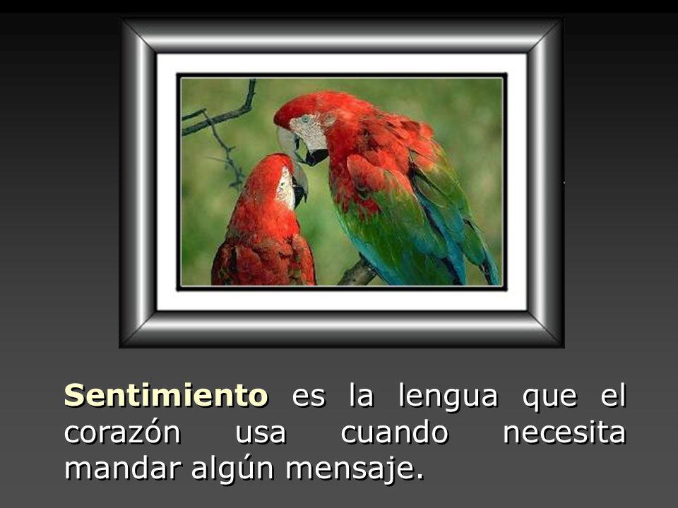 Sentimiento es la lengua que el corazón usa cuando necesita mandar algún mensaje.