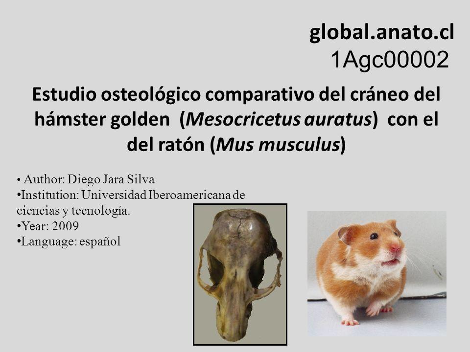 global.anato.cl 1Agc00002. Estudio osteológico comparativo del cráneo del. hámster golden (Mesocricetus auratus) con el del ratón (Mus musculus)