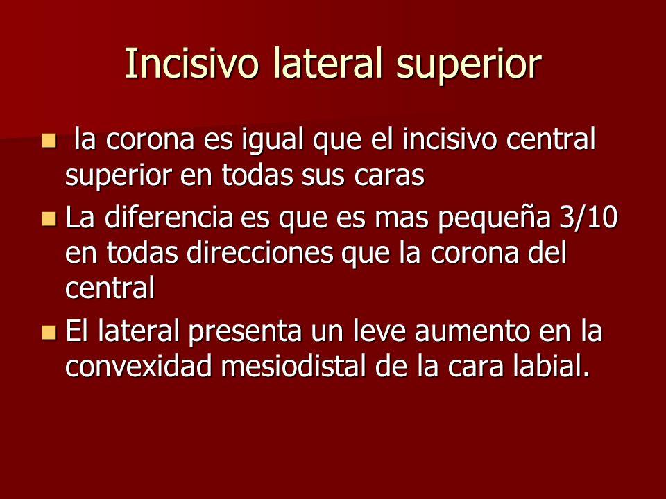 Incisivo lateral superior