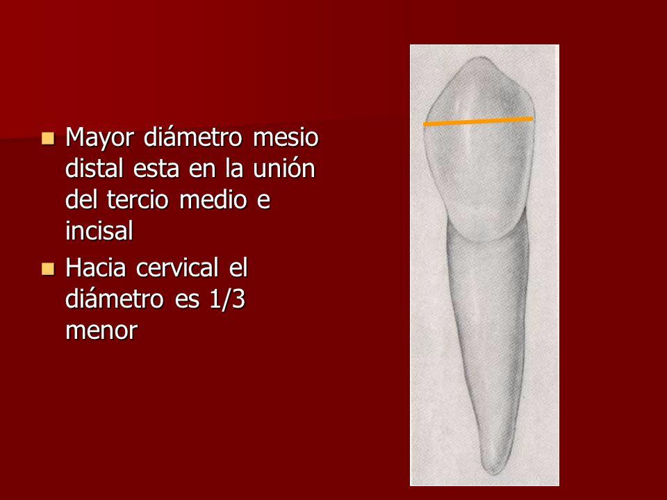 Mayor diámetro mesio distal esta en la unión del tercio medio e incisal
