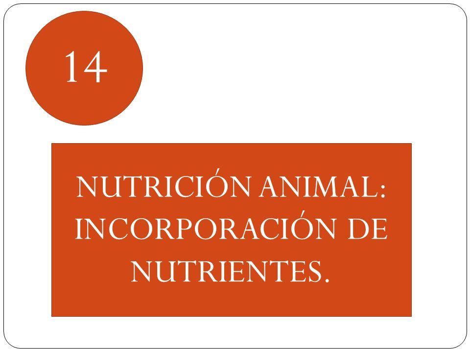 INCORPORACIÓN DE NUTRIENTES.